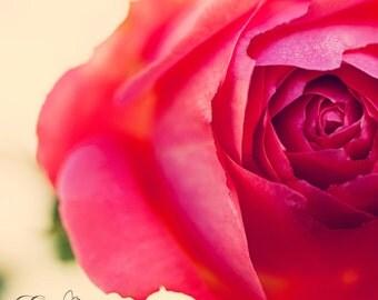 Vintage Rose #1 digital print