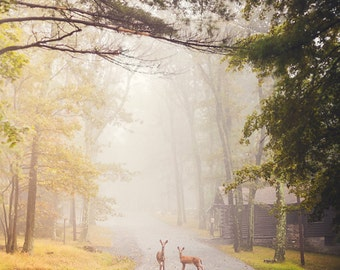 Landscape Fine Art Photograph, Deer Photo, Nature Art, Autumn Art, Wildlife Photo, Maryland Landscape, Woodland, Serenity, Foggy, Small Art
