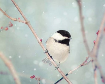 Winter Decor, Winter Photo, Bird Photo, Winter Art, Snow Photo, Nature Photography, Winter Bird Print, Chickadee in Snow No. 18