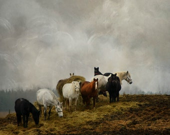 horses country field hill fine art photography animals color