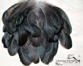 """Black Feathers Real Feathers Tail Feathers Metallic Feathers Bird Feathers Silver Laced Wyandotte Hen 15 @ 4 - 4.5"""" 1358 (Gallus domesticus)"""