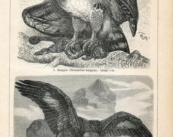 Antique Eagle Prints - Set of Two Prints - 1894 Vintage Prints - Home Decor - Gift for Him - Gift for Her