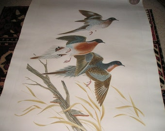 "Vintage Signed John A Ruthen Original Watercolour"" Passenger Pigeon"" Beautiful Colourful 42""x28"" Pristine."