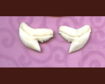 "Shark Week!! Pair of 5/8"" White TIGER Shark Teeth for Earrings   matched Sharp Pointed Shark's Tooth, Creamy White - Grade A Tooth- 2-58T"