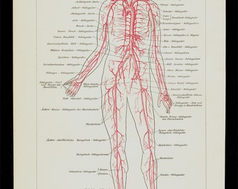 1911 circulatory system chart Antique print, ANATOMY print,  blood vessels,