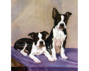 Boston Terrier Card - Puppies Sit For Portrait - Puppy Dogs