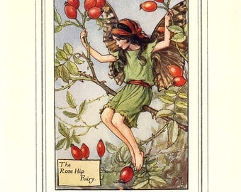 The ROSE HIP FAIRY Vintage Book Plate Original Page c. 1940 Book of the Flower Fairies Cicely M Barker