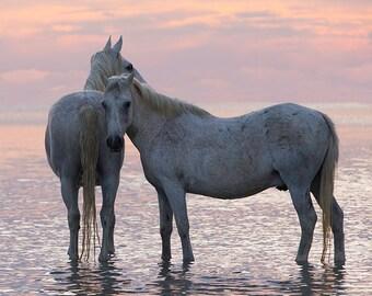 Sunset Friends - Fine Art Horse Photograph - Horse - Camargue - Fine Art Print