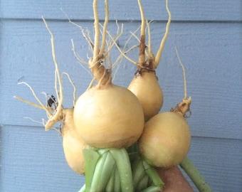 Golden Turnips Rare Heirloom Seeds Excellent Mild Turnip Flavor Easy To Grow