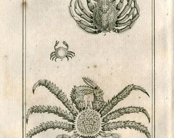 1802  Antique Print Crabs  Latreille, Buffon Arthropod Scientific Illustration