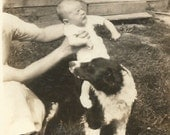 English Springer Spaniel - Vintage Dog Photo - Baby Going for a Ride on the Dog - Vintage Snapshot - Original Found Photo