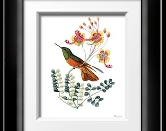 BOTANICAL ART PRINT of Hummingbird and Florals from a Original from 1877