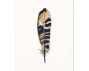 Pheasant Feather Drawing.