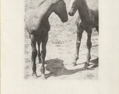 Littlests - Antique 1910s Two Foals Real Photo Postcard