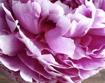"8x12"" Pink Flower Print"