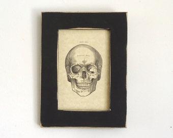 Skull illustration gothic home decor, framed wall decor, human skull, spooky Halloween art, skull drawing
