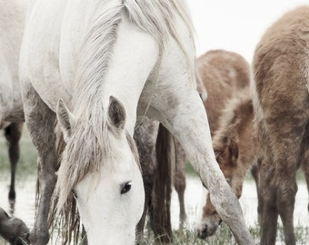 White Camargue Horse Photography,Horse print,Horse grazing in a field,France Horse Photography,Provence Horse Photography,Horse Wall Art