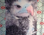 "Vulture 8"" x 10"" Archival Print"