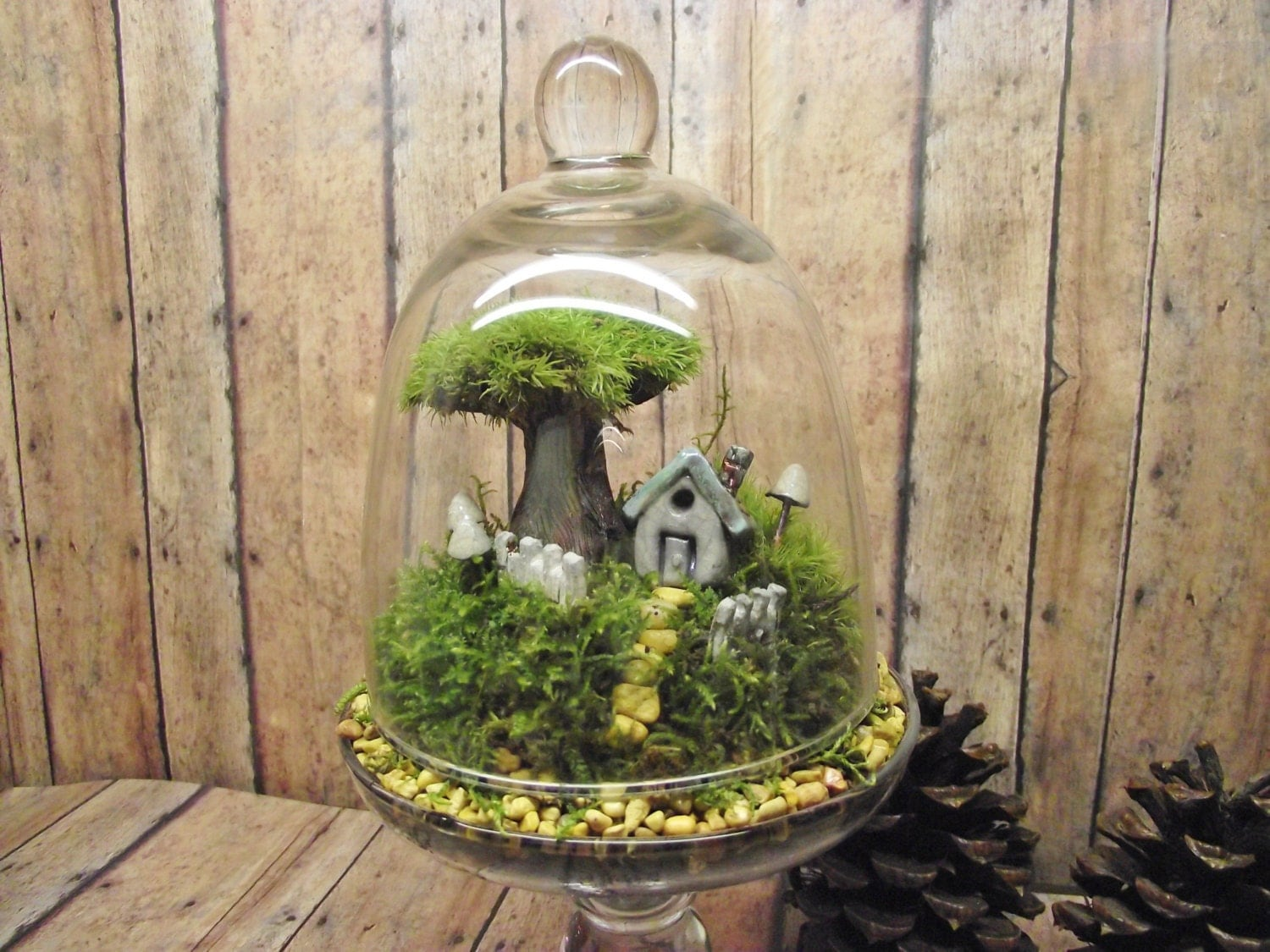home sweet home decor live moss terrarium miniature plant with. Black Bedroom Furniture Sets. Home Design Ideas