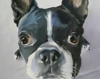 Boston Terrier, Dogs Portraits, Pet Portraits, Animal Portraits, Custom Portraits, Terriers
