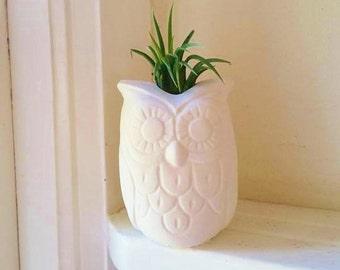 Owl planter, air plant holder, owl candle holder