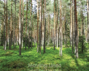 Nature Backdrop, Digital Photography Background, Sunny Pine Forest, Trees, Woods Wallpaper, Outdoors, Estonia 2ft