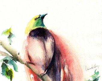 Bird Watercolor Painting, ORIGINAL Painting, Bird of Paradise