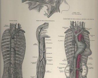 Veins of the Orbit,  Anatomical Plate 70, Descriptive Atlas of Anatomy 1880