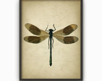 Dragonfly Wall Art Poster   Dragon Fly Home Decor   Entomology Wall Art    Biology Art