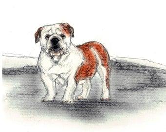 English Bulldog Vintage Style Print