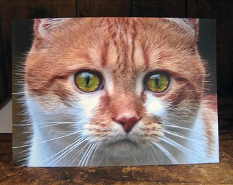 Cat Greeting Card - Cat's Eyes - Cat Lover's Card - Cat Portrait - Cat Photography - Blank Inside - With Envelope
