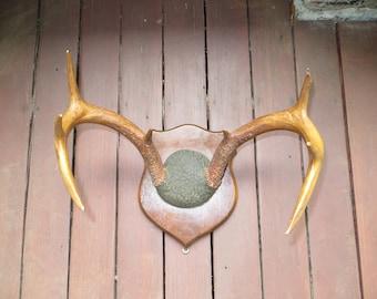 Deer Antlers Mounted Vintage