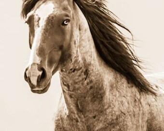 "Horse photographs, horse photo,Wild Horse Photographs. Wild Mustangs. ""Blaze"""