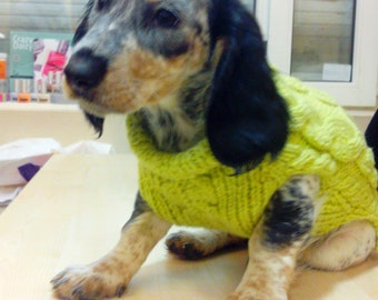 Dog sweater.Hand knitted Dog jumpers.Clothes for dog