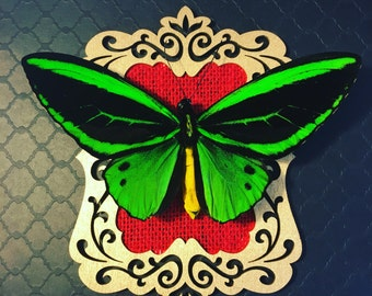 Red and Gold Birdwing Butterfly Shadow Box