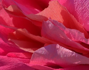 Realistic, Giant Paper Flower, Wedding, Coral Charm, Giant Crepe Paper Peony, hand dyed, approx 20 inches across.