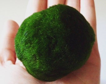 Marimo Moss Ball Good Luck Plant