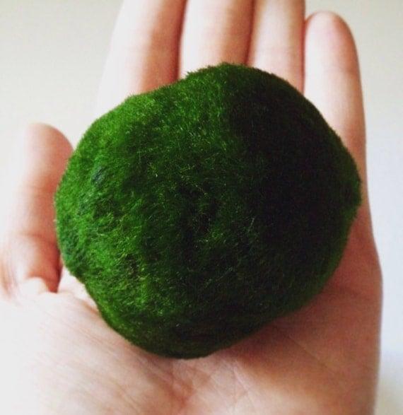 how to make aquarium moss balls