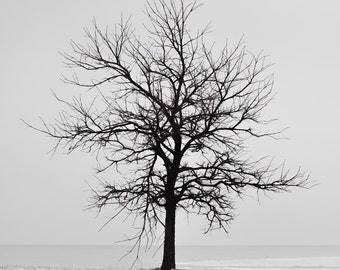 Tree Photography, Winter Tree Silhouette, Lone Tree, B&W Tree Wall Art, Tree Canvas, Nature Canvas, Photo on Wood Block, Minimalist