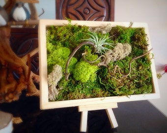 Moss Art Wall Hanging Garden Vertical Living