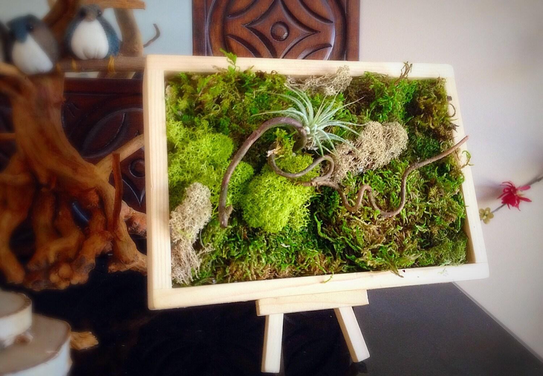 Moss art wall/ Hanging garden/ Vertical garden/ Living wall/