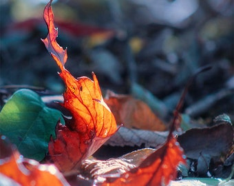 Autumn leaves photography, glowing leaves, fiery orange autumn, forest floor, micro photography, The Dance