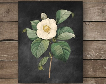 Botanical Print, Vintage Inspired, Chalkboard,Wall Print, Farmhouse Style