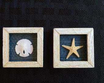 1:12th Scale Dollhouse Miniature Sand dollar and Starfish Shadowbox Pictures (Set of 2)