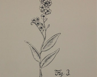 Forget Me Not: Botanical Silkscreen Print