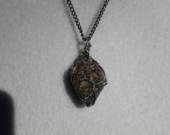 Turritella agate pendant
