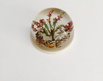 Vintage Heather Paperweight / Lucite Paperweight.