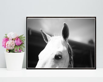 Horse Art, Black And White Horse Photo, Printable Art, Horse Print, Digital Download, Wall Art, Home Decor
