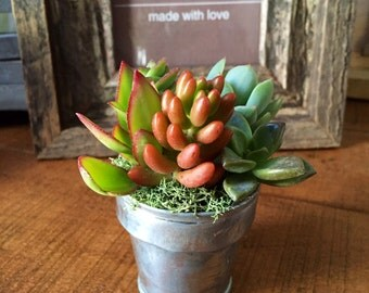 Potted Succulents Minis - Aluminum Can