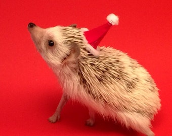 Santa Critter Hat